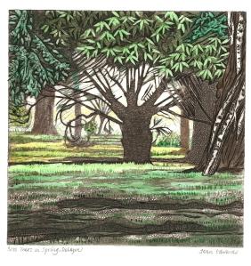 trees in spring, Delapre